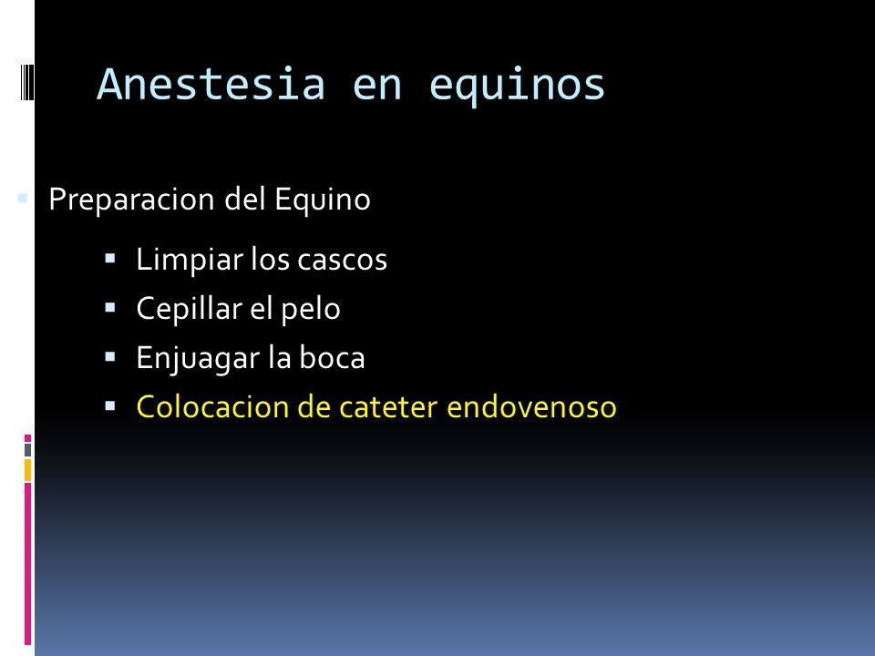 Anestesia en equinos Limpiar los cascos Cepillar el pelo Enjuagar la boca Colocacion de cateter endovenoso Preparacion del Equino