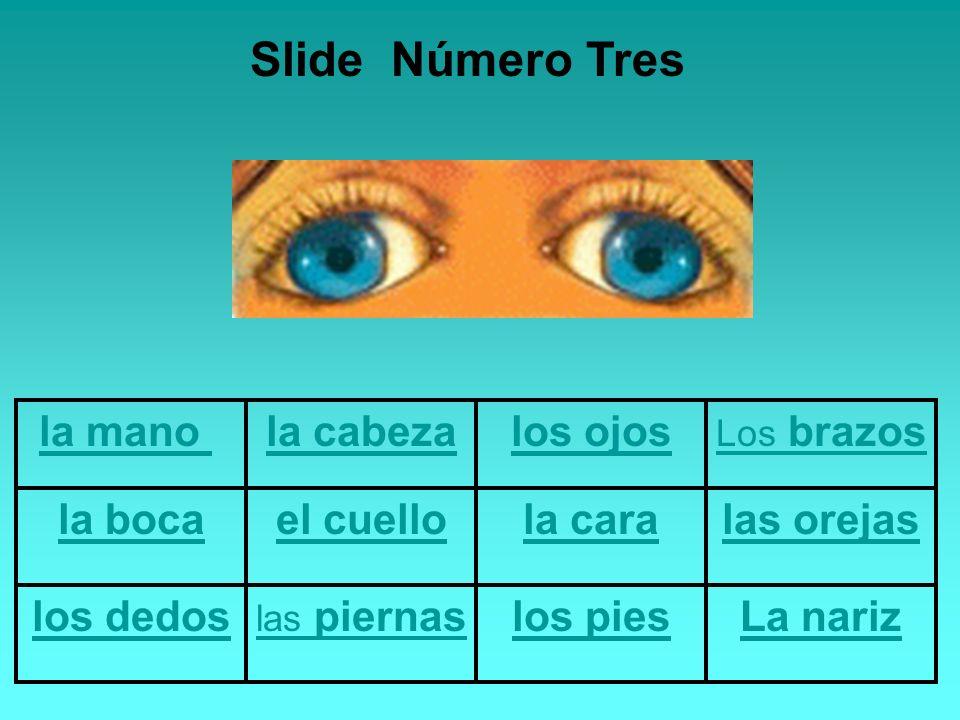 la mano la cabezalos ojos Los brazos la bocael cuellola caralas orejas los dedos las piernaslos piesLa nariz Slide Número Tres