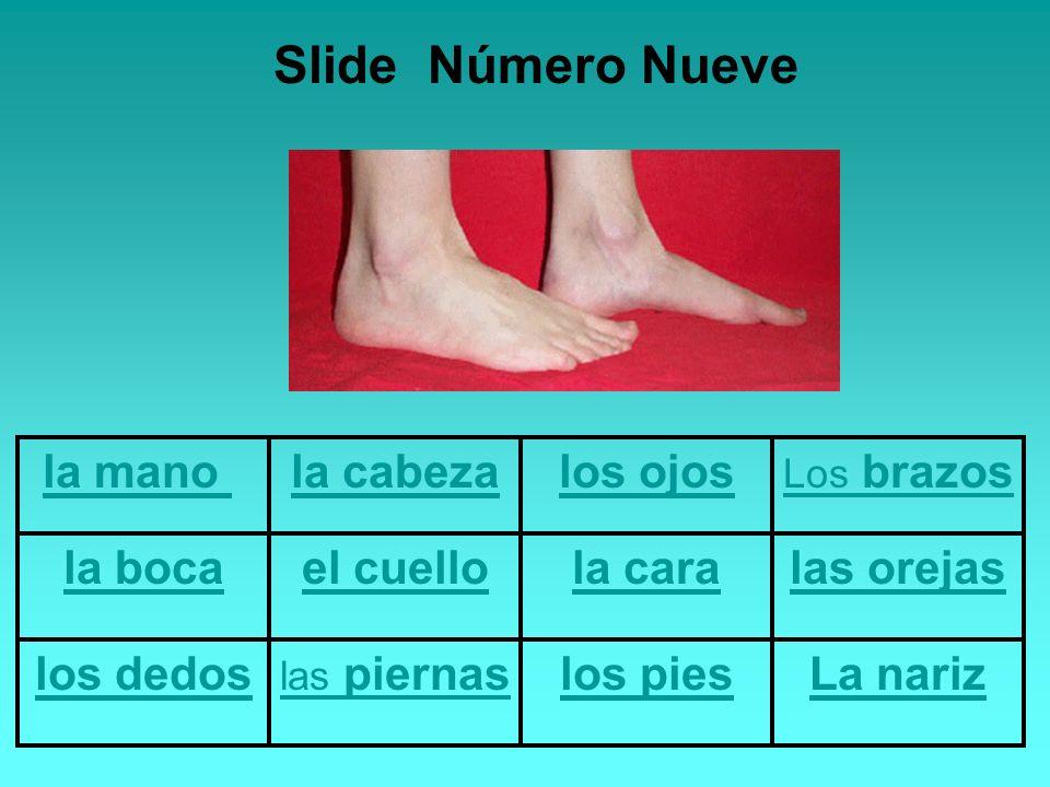 la mano la cabezalos ojos Los brazos la bocael cuellola caralas orejas los dedos las piernaslos piesLa nariz Slide Número Nueve