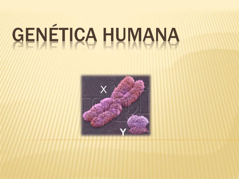 Producidas por la existencia de genes defectuosos que carecen de la información adecuada Ocasionan anomalías en el funcionamiento del organismo y enfermedades, a menudo, graves.