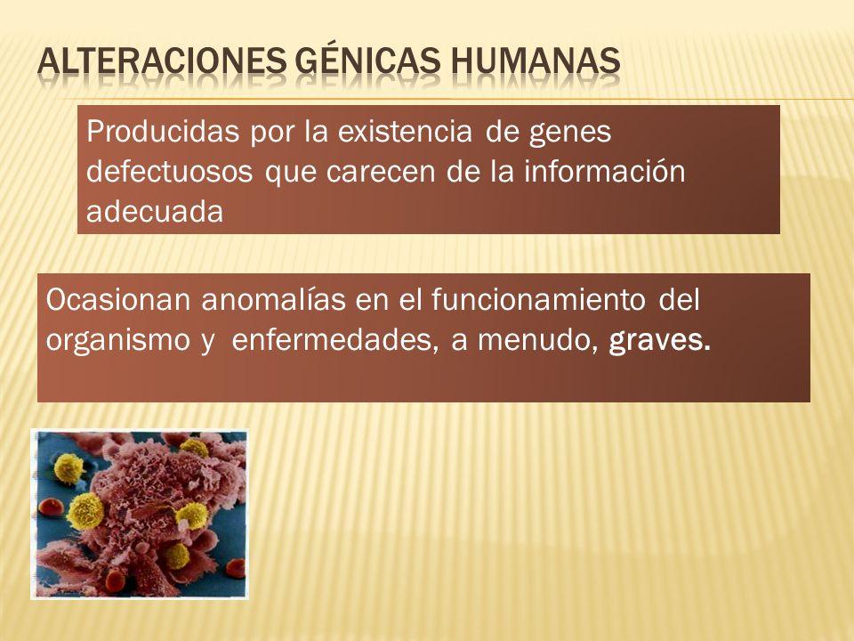 Producidas por la existencia de genes defectuosos que carecen de la información adecuada Ocasionan anomalías en el funcionamiento del organismo y enfe