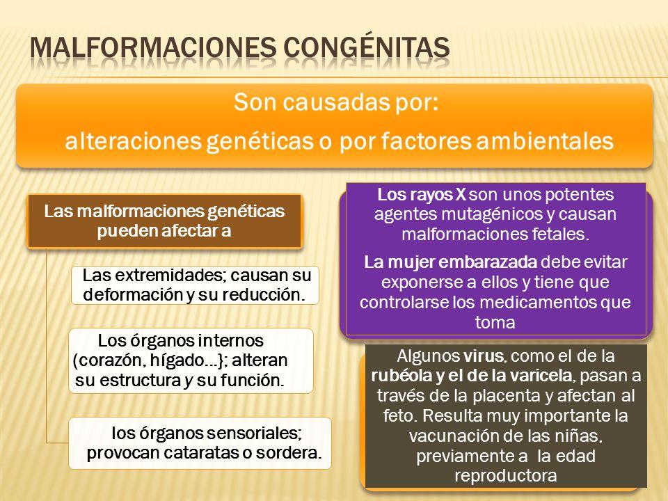 Son causadas por: alteraciones genéticas o por factores ambientales Las malformaciones genéticas pueden afectar a Las extremidades; causan su deformac