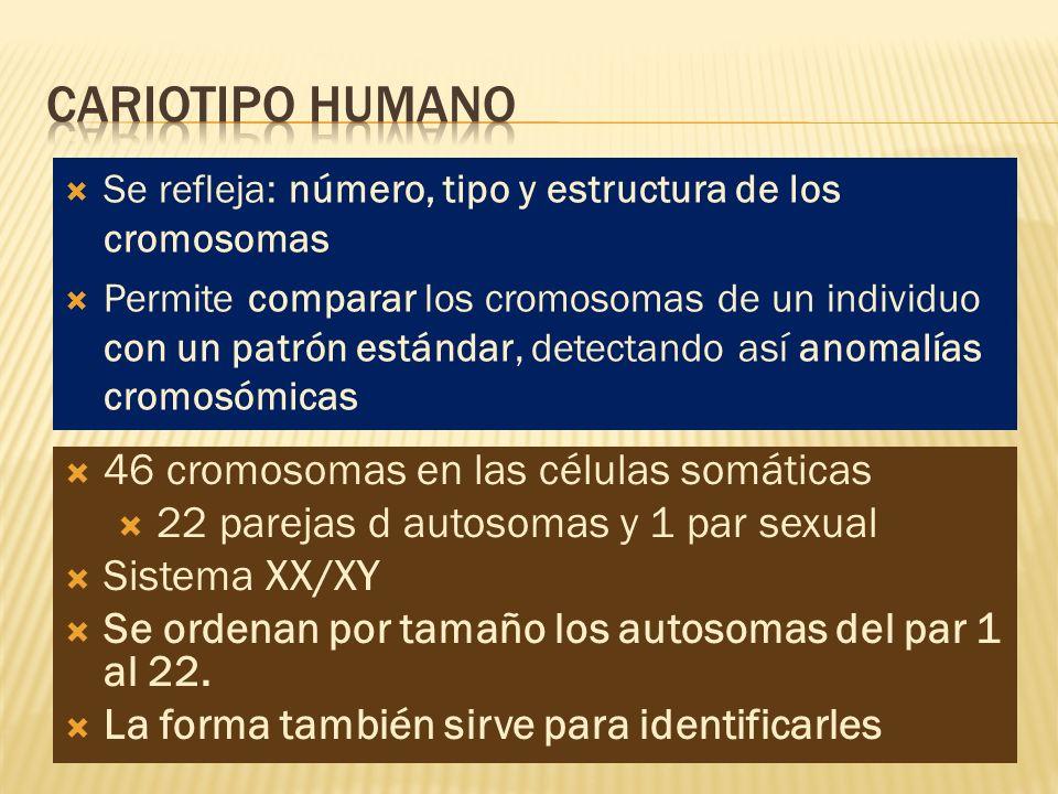 Se refleja: número, tipo y estructura de los cromosomas Permite comparar los cromosomas de un individuo con un patrón estándar, detectando así anomalí