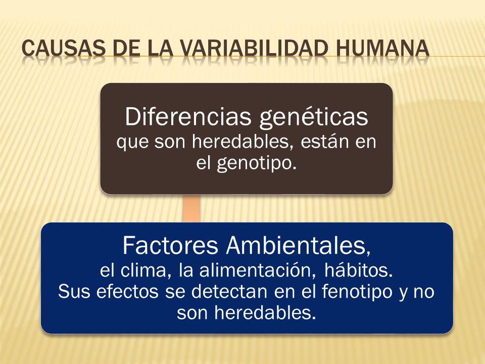 Diferencias genéticas que son heredables, están en el genotipo. Factores Ambientales, el clima, la alimentación, hábitos. Sus efectos se detectan en e