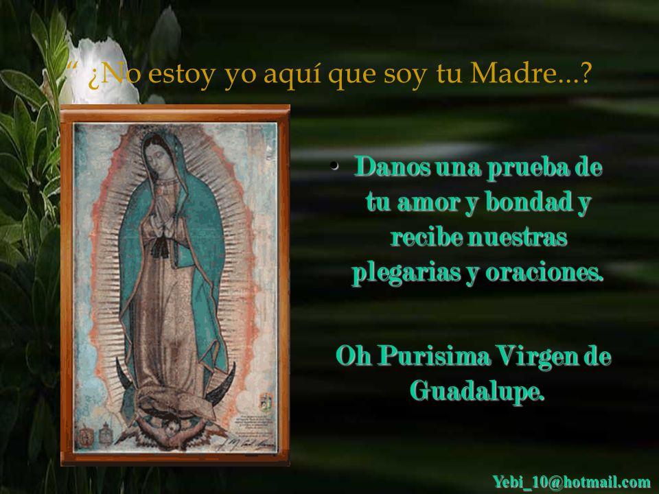 ¿No estoy yo aquí que soy tu Madre...? Carta a la Virgen de Guadalupe: Carta a la Virgen de Guadalupe: Hermosa Virgen de Guadalupe, te pido en nombre
