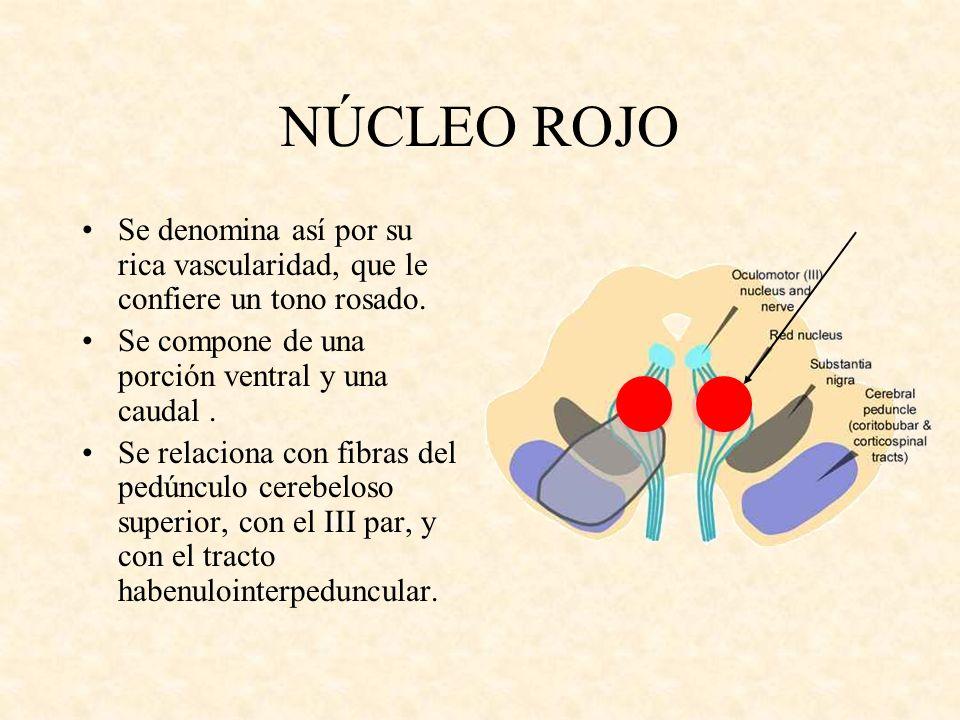 NÚCLEO ROJO Se denomina así por su rica vascularidad, que le confiere un tono rosado. Se compone de una porción ventral y una caudal. Se relaciona con
