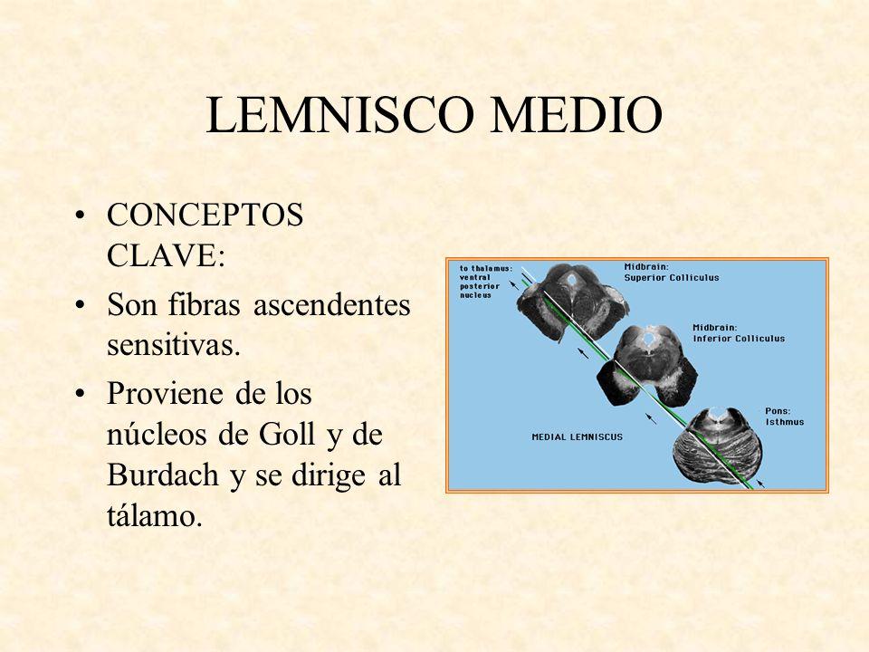 LEMNISCO MEDIO CONCEPTOS CLAVE: Son fibras ascendentes sensitivas. Proviene de los núcleos de Goll y de Burdach y se dirige al tálamo.