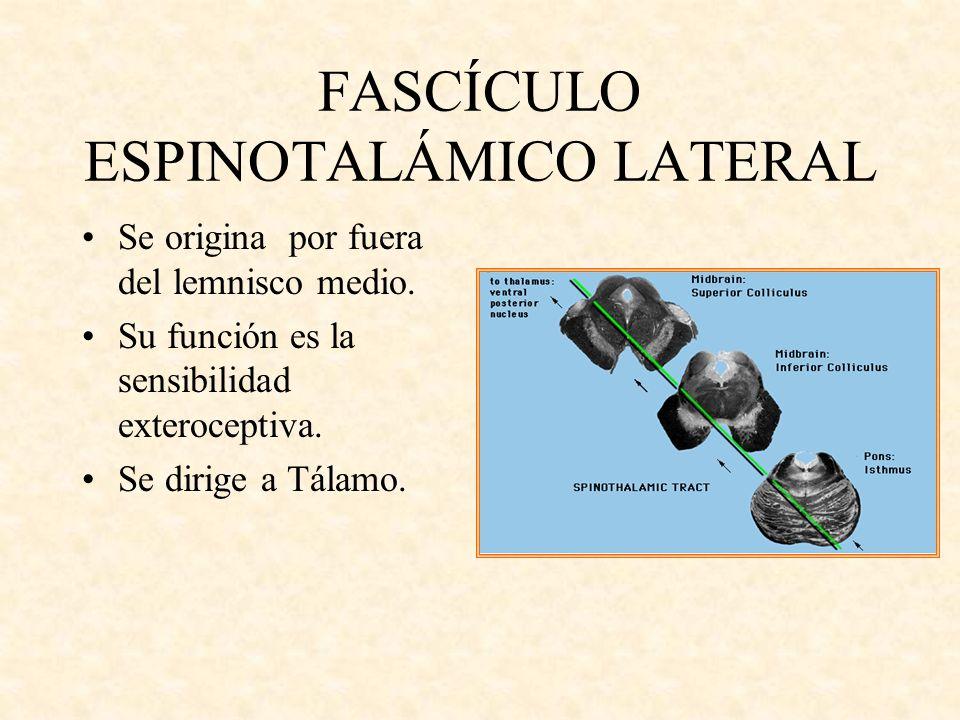 FASCÍCULO ESPINOTALÁMICO LATERAL Se origina por fuera del lemnisco medio. Su función es la sensibilidad exteroceptiva. Se dirige a Tálamo.