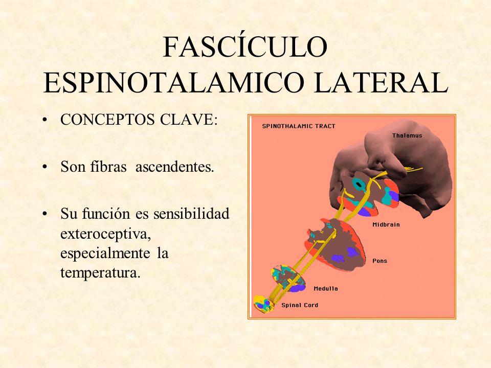 FASCÍCULO ESPINOTALAMICO LATERAL CONCEPTOS CLAVE: Son fíbras ascendentes. Su función es sensibilidad exteroceptiva, especialmente la temperatura.