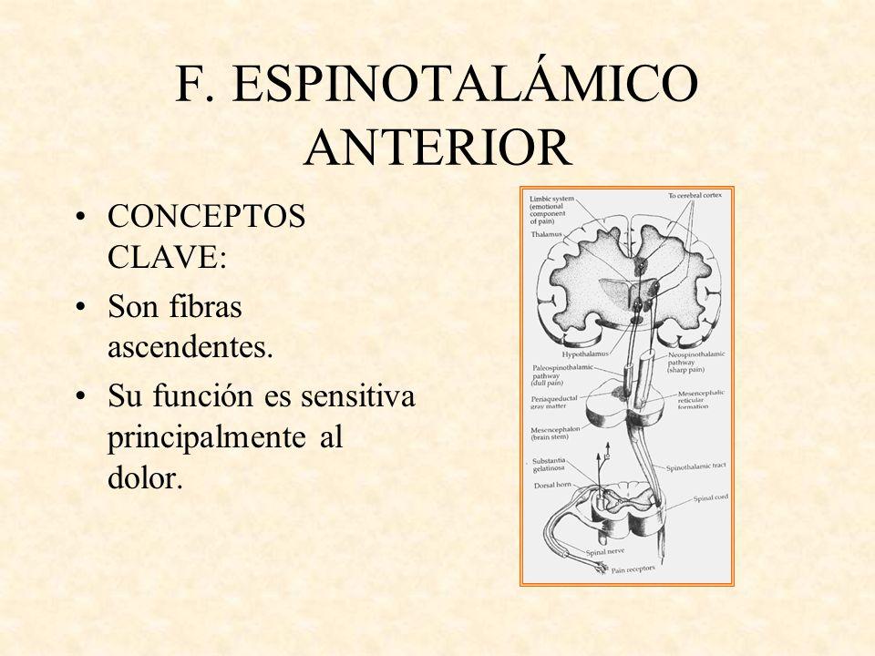 F. ESPINOTALÁMICO ANTERIOR CONCEPTOS CLAVE: Son fibras ascendentes. Su función es sensitiva principalmente al dolor.