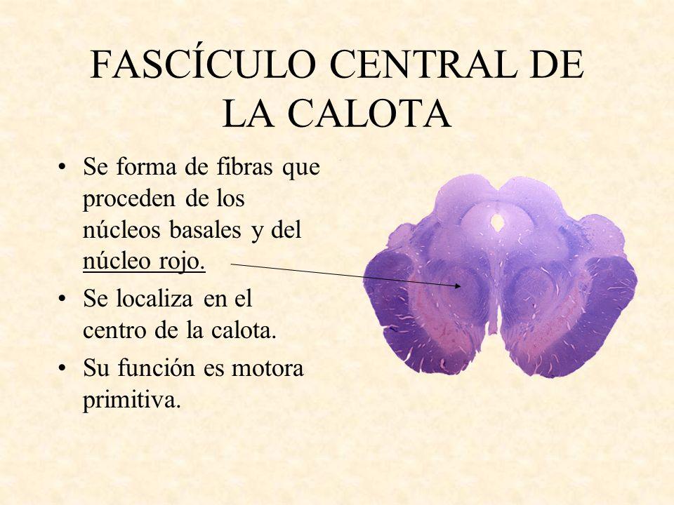 FASCÍCULO CENTRAL DE LA CALOTA Se forma de fibras que proceden de los núcleos basales y del núcleo rojo. Se localiza en el centro de la calota. Su fun