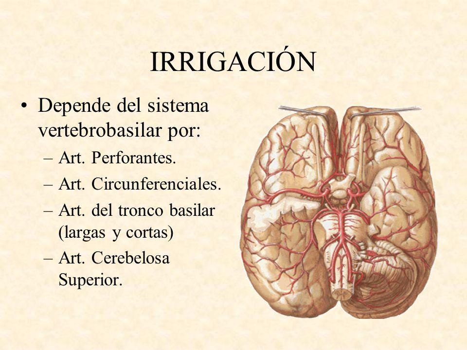 IRRIGACIÓN Depende del sistema vertebrobasilar por: –Art. Perforantes. –Art. Circunferenciales. –Art. del tronco basilar (largas y cortas) –Art. Cereb