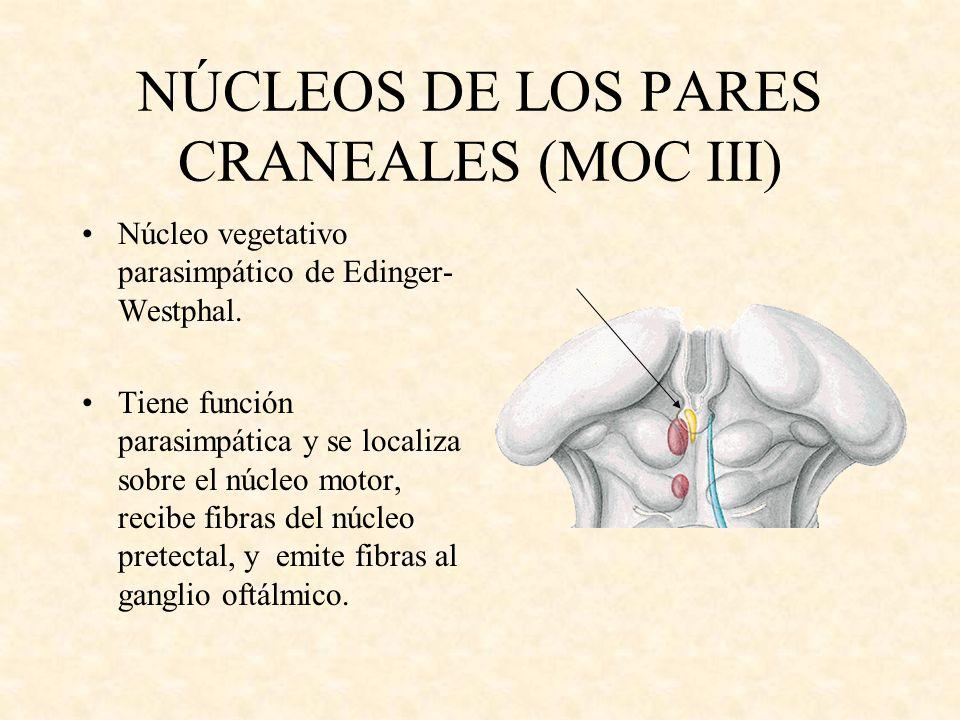NÚCLEOS DE LOS PARES CRANEALES (MOC III) Núcleo vegetativo parasimpático de Edinger- Westphal. Tiene función parasimpática y se localiza sobre el núcl