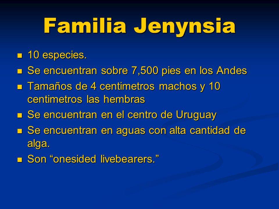 Familia Jenynsia 10 especies. 10 especies. Se encuentran sobre 7,500 pies en los Andes Se encuentran sobre 7,500 pies en los Andes Tamaños de 4 centim