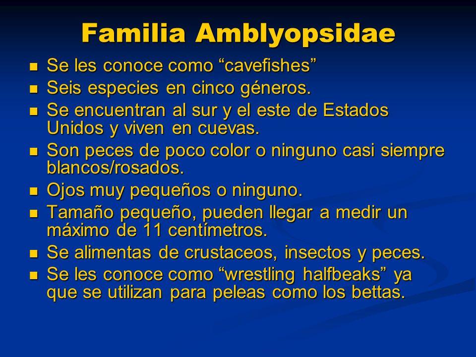 Familia Amblyopsidae Se les conoce como cavefishes Se les conoce como cavefishes Seis especies en cinco géneros. Seis especies en cinco géneros. Se en