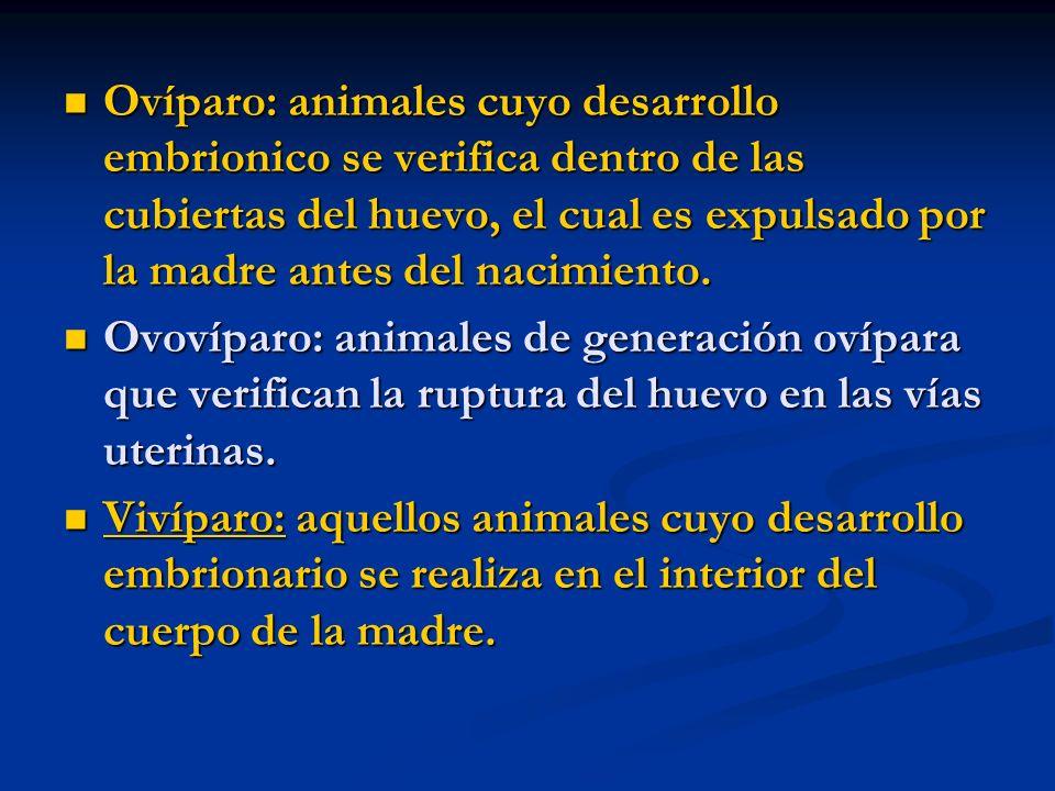 Ovíparo: animales cuyo desarrollo embrionico se verifica dentro de las cubiertas del huevo, el cual es expulsado por la madre antes del nacimiento. Ov