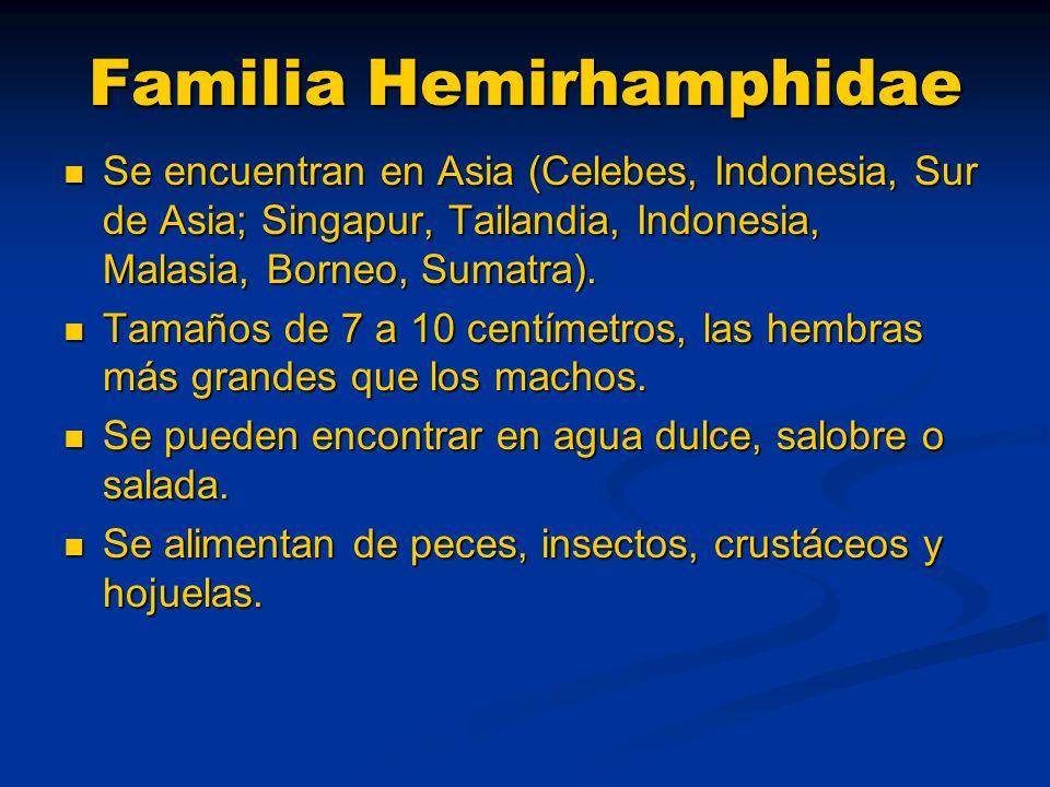 Familia Hemirhamphidae Se encuentran en Asia (Celebes, Indonesia, Sur de Asia; Singapur, Tailandia, Indonesia, Malasia, Borneo, Sumatra).