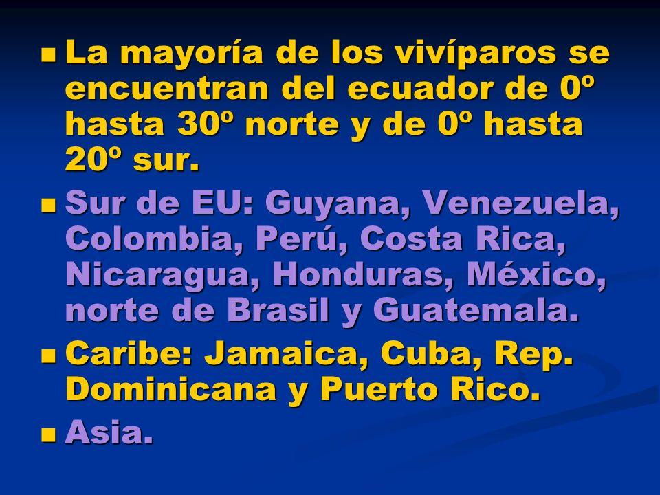 La mayoría de los vivíparos se encuentran del ecuador de 0º hasta 30º norte y de 0º hasta 20º sur. La mayoría de los vivíparos se encuentran del ecuad