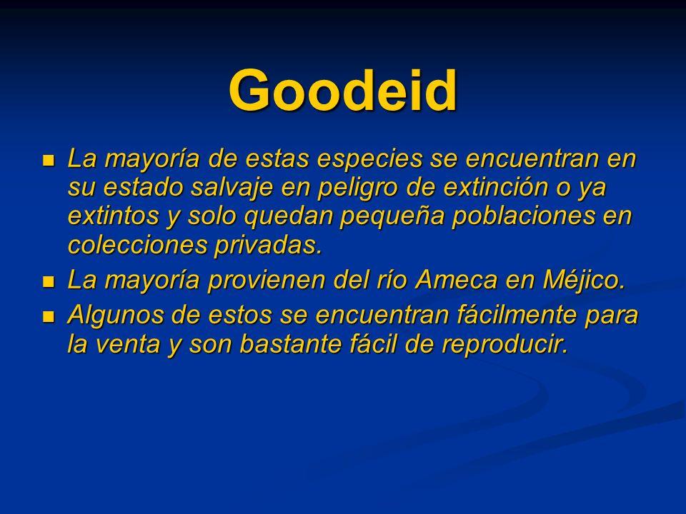 Goodeid La mayoría de estas especies se encuentran en su estado salvaje en peligro de extinción o ya extintos y solo quedan pequeña poblaciones en colecciones privadas.
