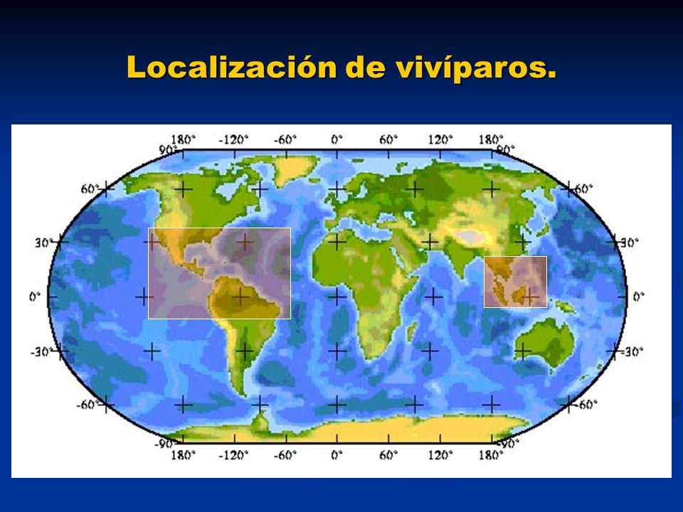 Diferencias entre los Goodeids y Poecilias Goodeids Goodeids Tierras altas y planicies de Méjico.