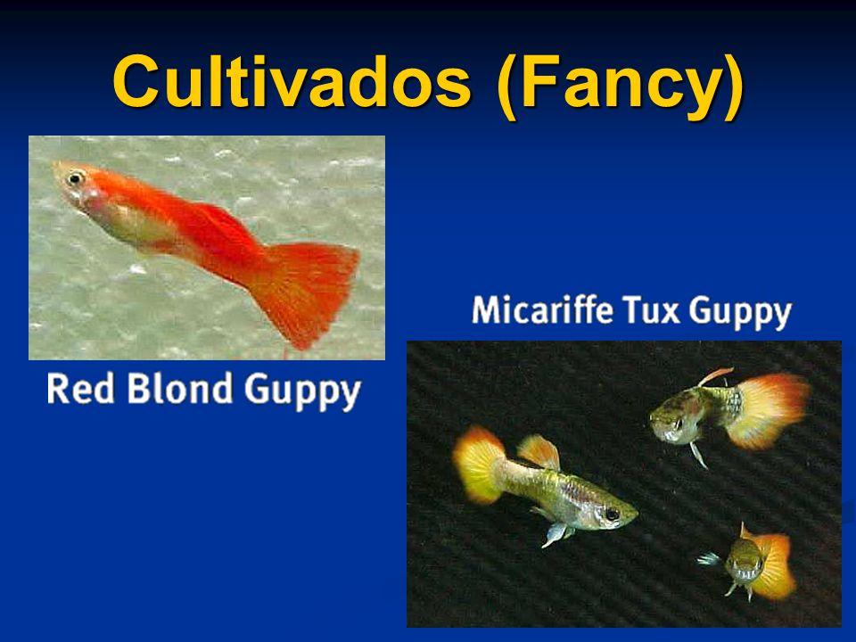 Cultivados (Fancy)