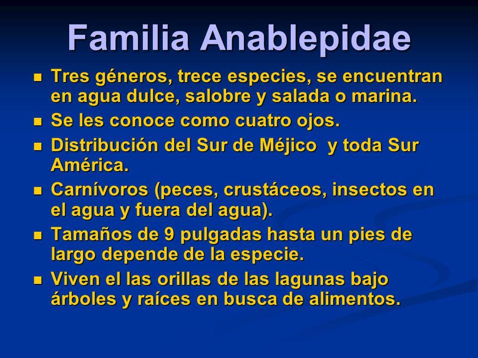 Familia Anablepidae Tres géneros, trece especies, se encuentran en agua dulce, salobre y salada o marina. Tres géneros, trece especies, se encuentran