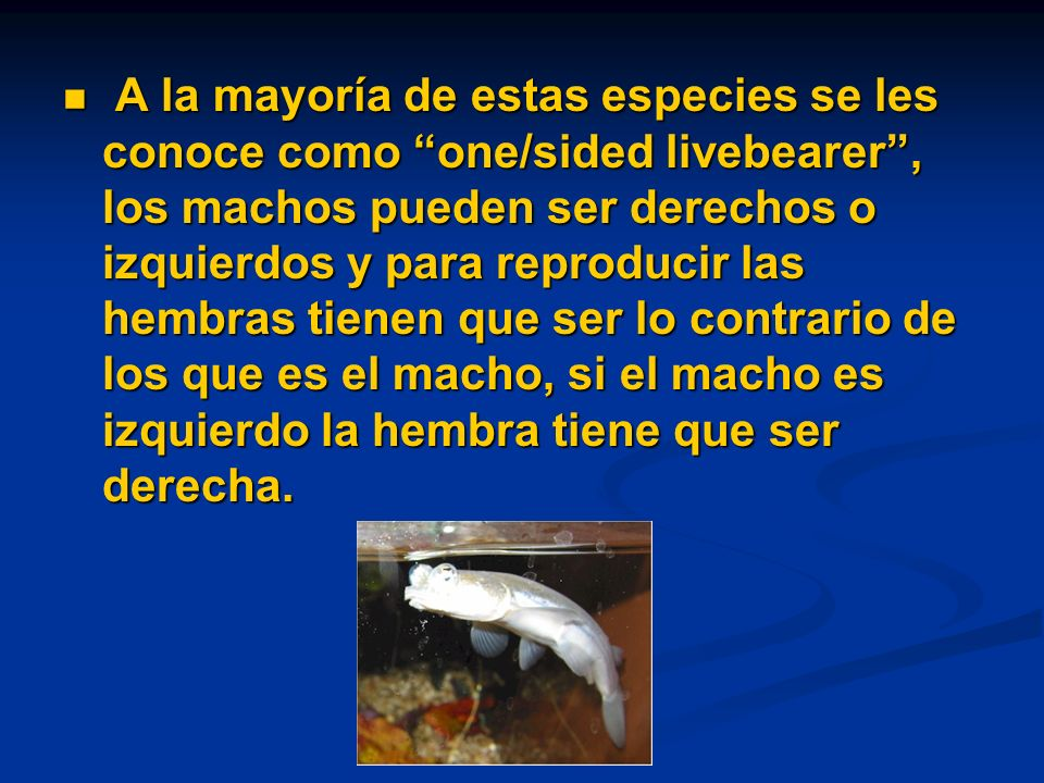 A la mayoría de estas especies se les conoce como one/sided livebearer, los machos pueden ser derechos o izquierdos y para reproducir las hembras tienen que ser lo contrario de los que es el macho, si el macho es izquierdo la hembra tiene que ser derecha.