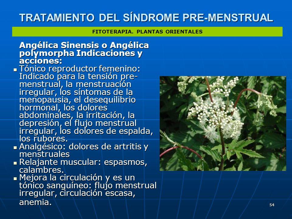 54 TRATAMIENTO DEL SÍNDROME PRE-MENSTRUAL Angélica Sinensis o Angélica polymorpha Indicaciones y acciones: Tónico reproductor femenino: Indicado para