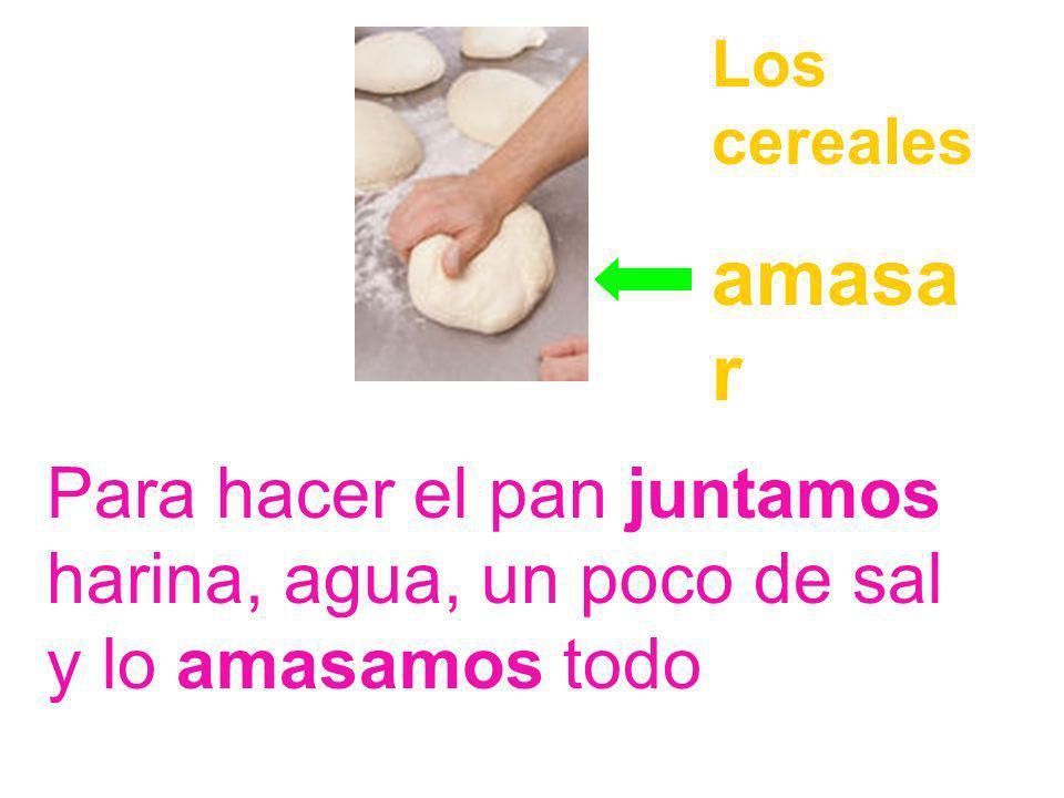 El trigo se muele para tener harina. Con la harina podemos hacer pan y otros alimentos Los cereales