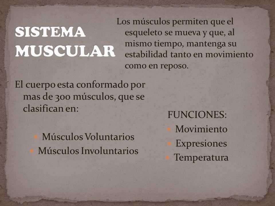 Los músculos permiten que el esqueleto se mueva y que, al mismo tiempo, mantenga su estabilidad tanto en movimiento como en reposo.