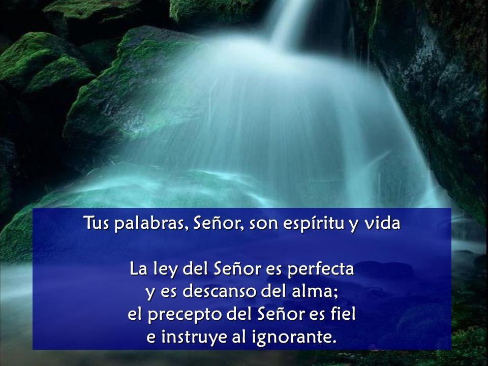 Meditando el Santo Evangelio oremos el Salmo: 18,8.9.10.15