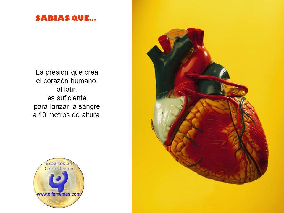 SABIAS QUE… La presión que crea el corazón humano, al latir, es suficiente para lanzar la sangre a 10 metros de altura.