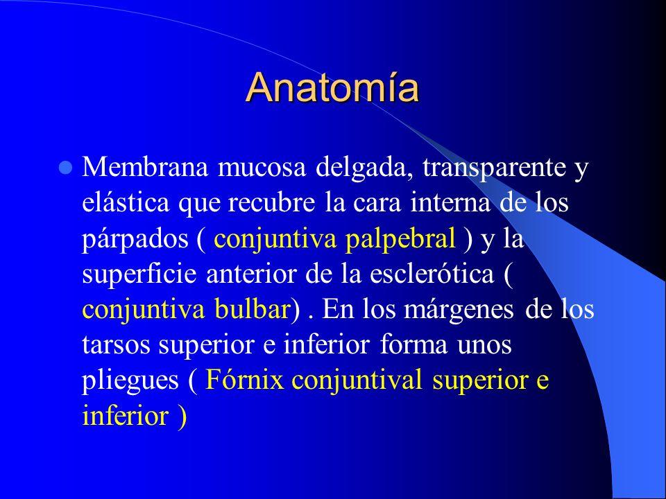 Anatomía Membrana mucosa delgada, transparente y elástica que recubre la cara interna de los párpados ( conjuntiva palpebral ) y la superficie anterio
