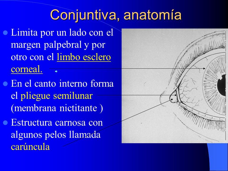 Conjuntivitis membranosas (pueden producir cicatrización) Corynebacterium difterae.