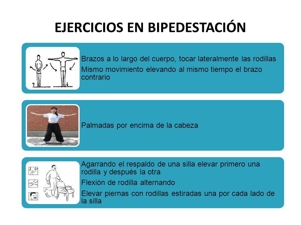 EJERCICIOS EN BIPEDESTACIÓN Brazos a lo largo del cuerpo, tocar lateralmente las rodillas Mismo movimiento elevando al mismo tiempo el brazo contrario