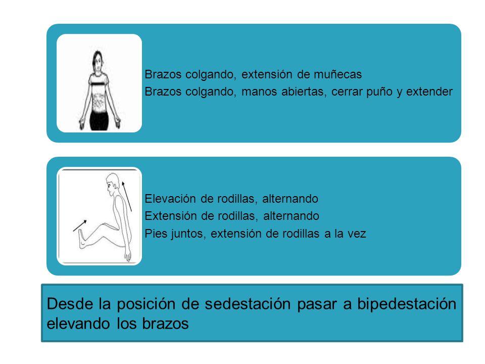 Brazos colgando, extensión de muñecas Brazos colgando, manos abiertas, cerrar puño y extender Elevación de rodillas, alternando Extensión de rodillas,