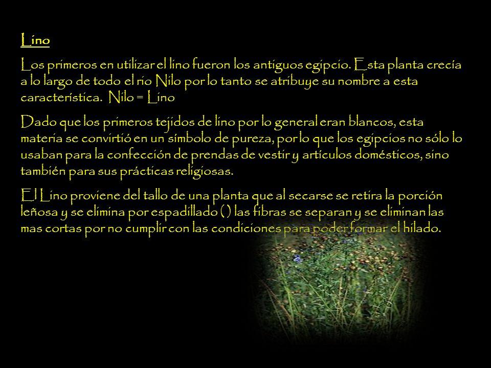 Esparto Nombre común de una hierba originaria del Mediterráneo occidental.
