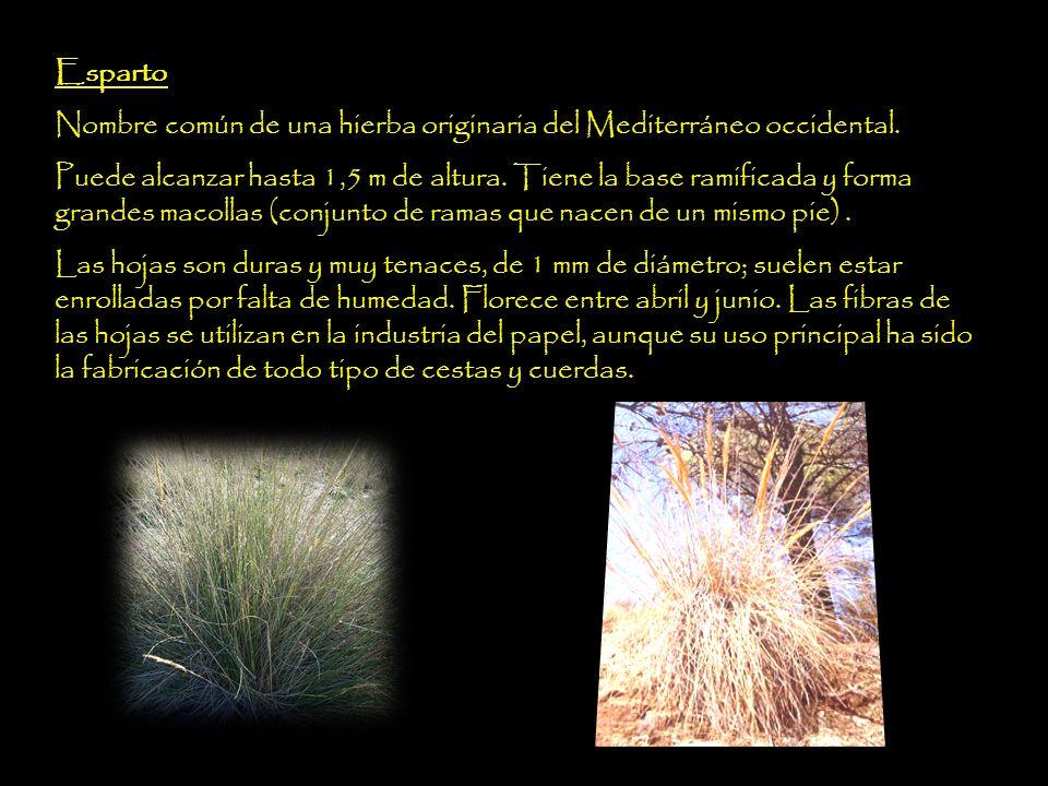 Fibras de origen animal y cuero El componente principal de la seda es la fibroína proteínica.