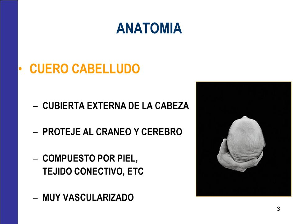 ANATOMIA CUERO CABELLUDO – CUBIERTA EXTERNA DE LA CABEZA – PROTEJE AL CRANEO Y CEREBRO – COMPUESTO POR PIEL, TEJIDO CONECTIVO, ETC – MUY VASCULARIZADO