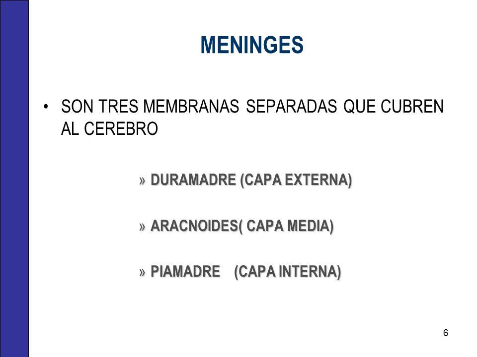 MENINGES SON TRES MEMBRANAS SEPARADAS QUE CUBREN AL CEREBRO » DURAMADRE (CAPA EXTERNA) » ARACNOIDES( CAPA MEDIA) » PIAMADRE (CAPA INTERNA) 6
