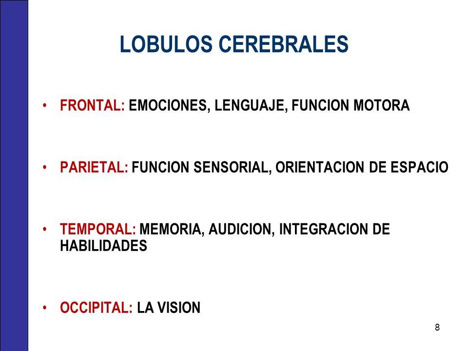 LOBULOS CEREBRALES FRONTAL: EMOCIONES, LENGUAJE, FUNCION MOTORA PARIETAL: FUNCION SENSORIAL, ORIENTACION DE ESPACIO TEMPORAL: MEMORIA, AUDICION, INTEG