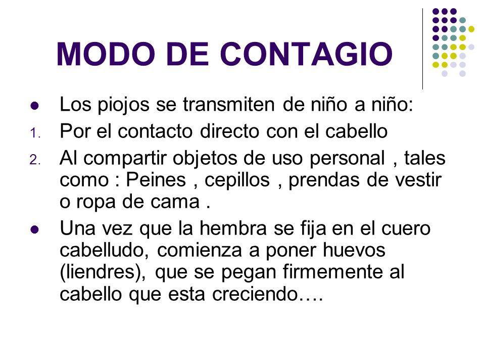 MODO DE CONTAGIO …Unos 7-8 días mas tarde, los huevos se abren y los piojos se liberan en el cuero cabelludo.