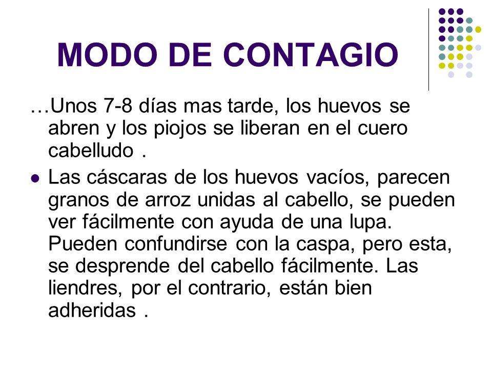 MODO DE CONTAGIO …Unos 7-8 días mas tarde, los huevos se abren y los piojos se liberan en el cuero cabelludo. Las cáscaras de los huevos vacíos, parec