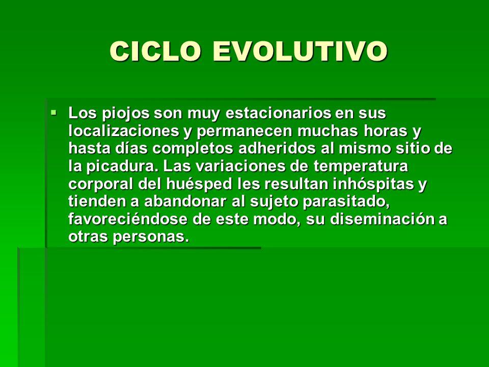 CICLO EVOLUTIVO Los piojos son muy estacionarios en sus localizaciones y permanecen muchas horas y hasta días completos adheridos al mismo sitio de la picadura.