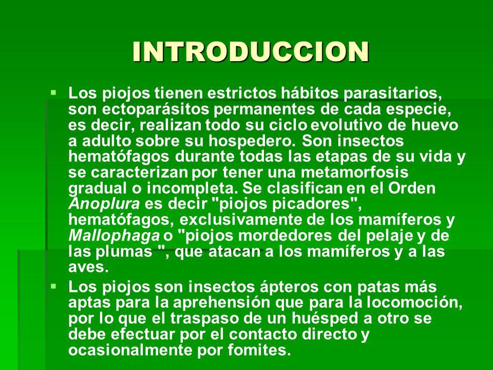 INTRODUCCION Los piojos tienen estrictos hábitos parasitarios, son ectoparásitos permanentes de cada especie, es decir, realizan todo su ciclo evolutivo de huevo a adulto sobre su hospedero.