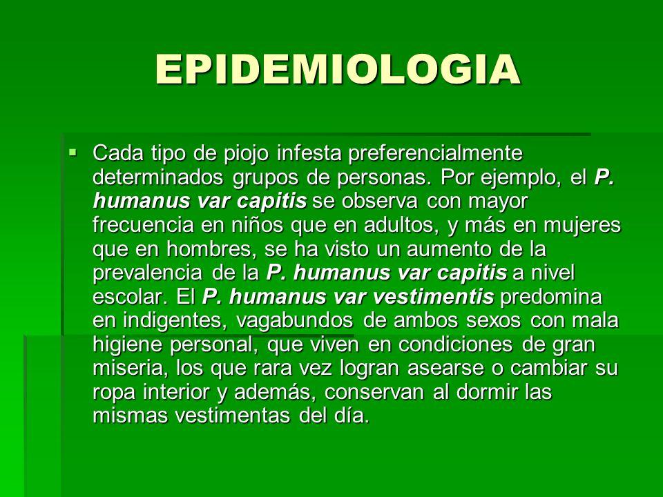 EPIDEMIOLOGIA Cada tipo de piojo infesta preferencialmente determinados grupos de personas. Por ejemplo, el P. humanus var capitis se observa con mayo