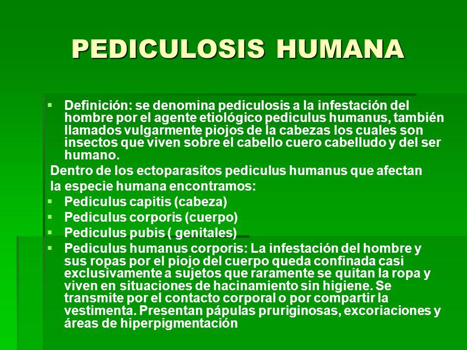 PEDICULOSIS HUMANA Definición: se denomina pediculosis a la infestación del hombre por el agente etiológico pediculus humanus, también llamados vulgarmente piojos de la cabezas los cuales son insectos que viven sobre el cabello cuero cabelludo y del ser humano.