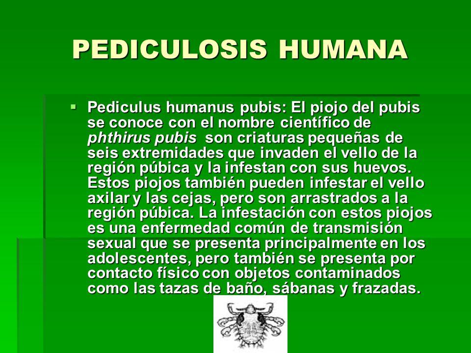 PEDICULOSIS HUMANA Pediculus humanus pubis: El piojo del pubis se conoce con el nombre científico de phthirus pubis son criaturas pequeñas de seis extremidades que invaden el vello de la región púbica y la infestan con sus huevos.