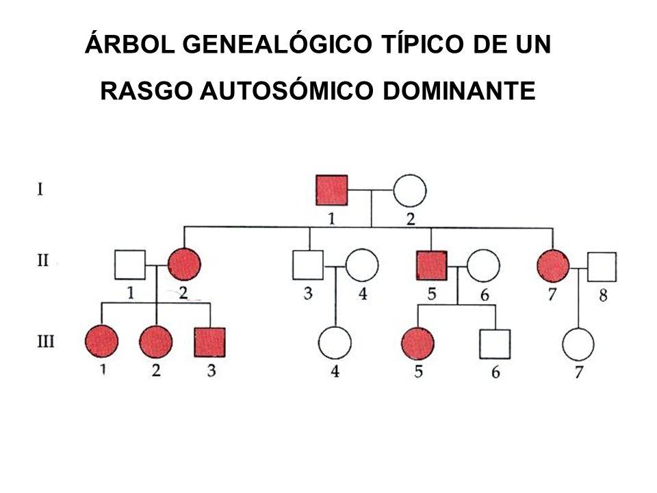 ÁRBOL GENEALÓGICO TÍPICO DE UN RASGO AUTOSÓMICO DOMINANTE