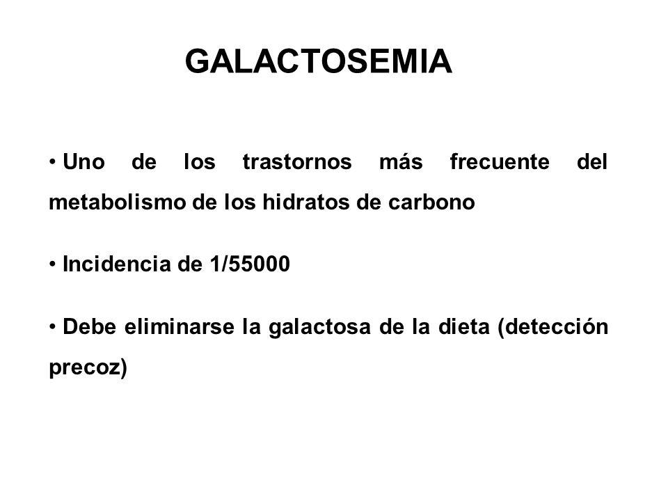 Uno de los trastornos más frecuente del metabolismo de los hidratos de carbono Incidencia de 1/55000 Debe eliminarse la galactosa de la dieta (detección precoz) GALACTOSEMIA